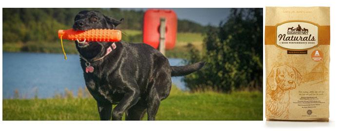 HighPerformance_Canine-Athlete-700x270