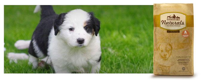 Puppy-700x270